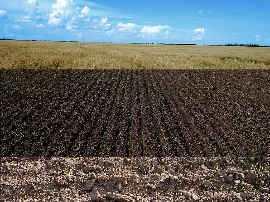 Soil Carbon Storage
